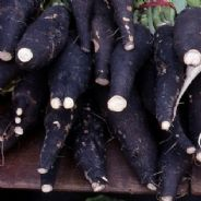Radish Black Spanish Long Seeds